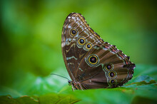 Colombia Is One Of The Countries With The Greatest Biodiversity Of Butterflies In The World