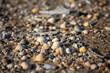 Hintergrund mit Strand, Muscheln und Sand