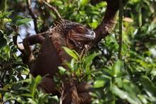 Lizard In The Tree