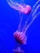 Leinwandbild Motiv Close-up Of Jellyfish Swimming In Sea