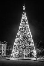 Vivid Christmas Tree Night