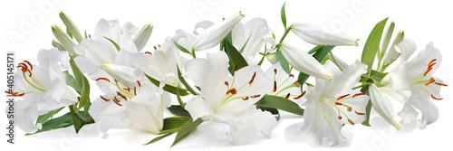 Stampa su Tela white lily   long