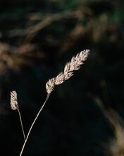 Close Up Of Dry Grass In Winter