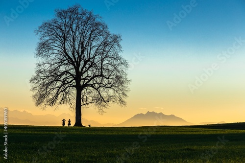 Obraz na plátně Silhouette Tree On Field Against Sky During Sunset