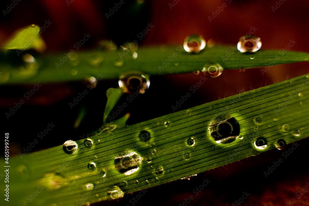 Fototapeta liść makro zielony z kroplami wody