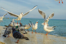 Seagulls And Pigeons Near The Sea On A Summer Day.
