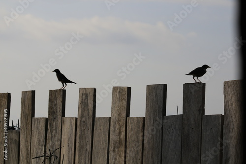 Fototapeta premium Birds Perching On Wooden Post
