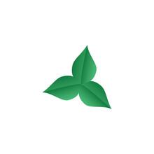Green Leaf On A White Background, Vector Illustration