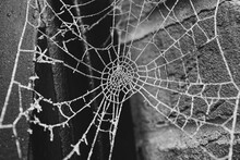 Frozen Spider Cobweb On A Chilly Morning In Front Of A Brick Wall At Metal Gate Post In Black And White