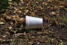 Styrofoam Cup In A Bed Of Leaves