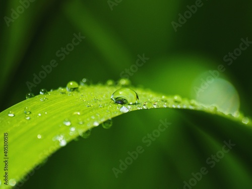 Obraz Close-up Of Water Drops On Plant Leaves - fototapety do salonu