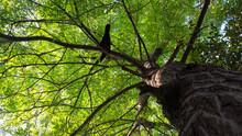 Tree Potrait
