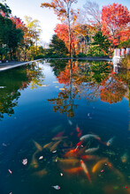 Koi Pond In Autumn Park