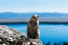 Squirrel Standing On The Granite Rock, Curiously Looking Directly At The Camera. Blurred Blue Lake, Valley And Mountain Scenery In The Distance