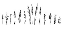 Hand-drawn Vector Drawing In Black Outline. A Set Of Wild Field Grasses, Meadow Flowers, Inflorescences, Spikelets, Stems, Grass.