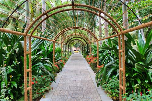 Photographie Jungle Way