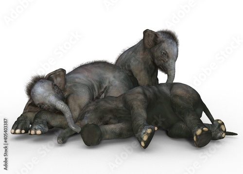 group of puppies Fototapet
