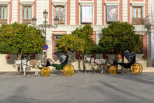 Empty Horse-drawn Carriages Wait For Tourists At The Plaza Del Triunfo Square For Tourists