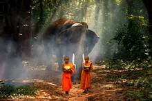 Monks And Monks Are Walking Alms In The Forest Between The Villages With Elephants Following Their Backs. Surin, Thailand