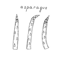 Set Of Three Sprigs Of Asparagus, Vector Illustration, Sketch
