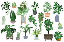 Big Set Of Home Plants In Pots, Scandi Style