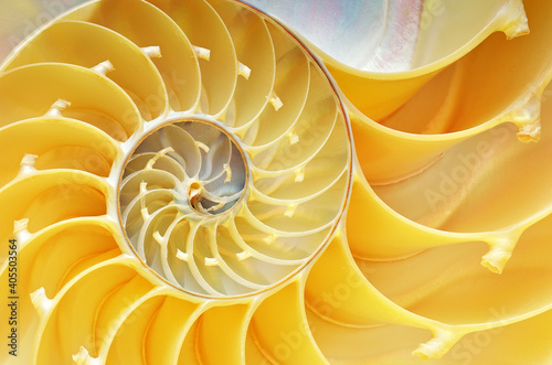 Canvas Print Close-up of a nautilus shell revealing its intricate patterns, textures, and det