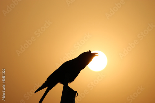 Fototapeta premium Silhouette of a raven perched on a wooden plank during a beautiful sunset