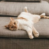 Close-up Of A Cat Resting On Sofa