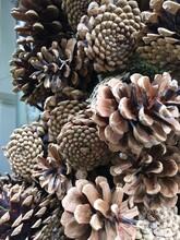 Close-up Of Dried Decoratice Pine Cones