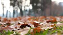 Kışın Yapraklar Süper