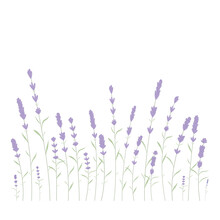 Cute Cartoon Black Cat On Floral Lavender Background. Home Kitten With Black Legs And Big Eyes. Vector Children S Illustration For Books.