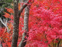 Red Trees In Forest During Autumn