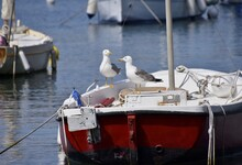 Seagulls Perching On Boat Moored In Sea
