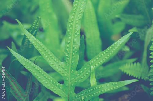 Papel de parede Close-up Of Raindrops On Grass