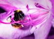 Leinwandbild Motiv Close-up Of Bee On Purple Flower