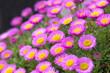 Leinwandbild Motiv Close-up Of Fresh Purple Flowers In Field