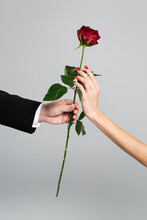 Cropped View Of Man Giving Red Rose To Woman Isolated On Grey