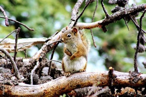 Fototapeta premium Close-up Of Squirrel
