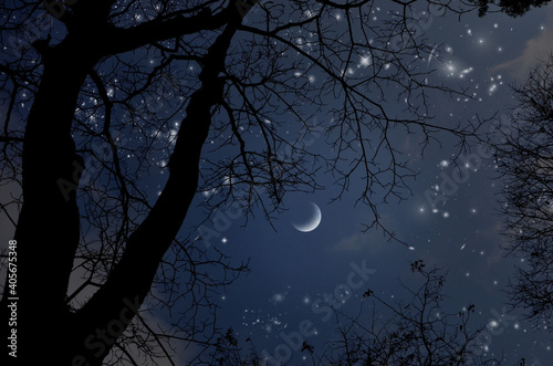 Slika na platnu Bright stars in lonely crescent night over the fall forest