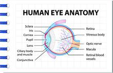 Human Eye Anatomy Diagram Poster. Human Eye Parts All Names Template Illustration