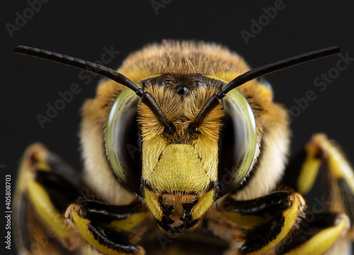 bee close-up on a dark background #405808703