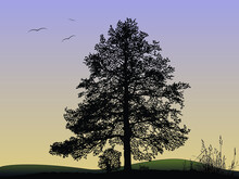 Vector Silhouette Of Natural Oak Tree.Tree Silhouette On The Background Of Birds Soaring In The Sky.