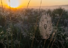 Close-up Of  Spider Web Covered In Dew Droos On Plant At Field At Sunrise