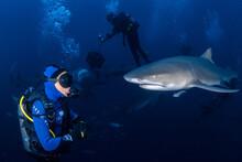 Girl Swimming With Lemon Shark - Negaprion Brevirostris