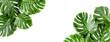 Leinwandbild Motiv Banner of green tropical palm leaves Monstera on white background. Flat lay, top view.