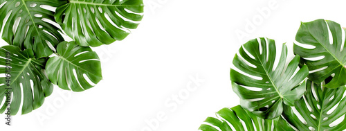 Banner of green tropical palm leaves Monstera on white background. Flat lay, top view. - fototapety na wymiar
