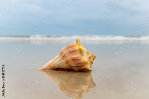 seashell on the beach Wallpaper Mural