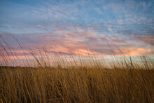Sunset Over Prairie Grasses. Beautiful Sky Casts Colors Across The Tall Weeds In Grain Field
