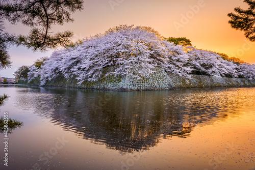 Hikone, Japonia na Fosy Zamkowej w sezonie wiosennym