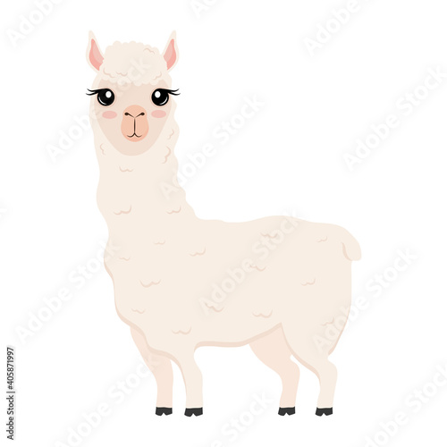 Fototapeta premium cute alpaca exotic animal character vector illustration design